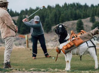 Goat Caddies Make Debut